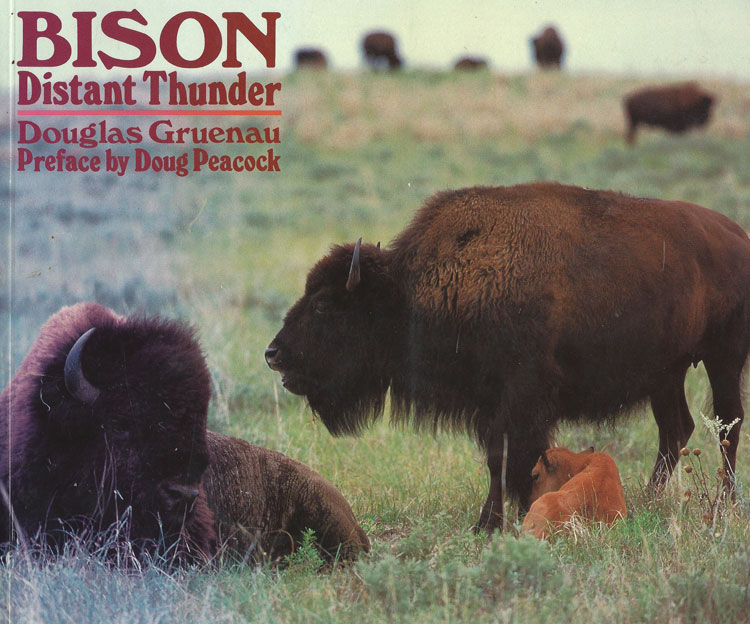 Bison Distant Thunder